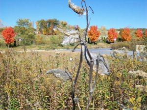 milkweeds2