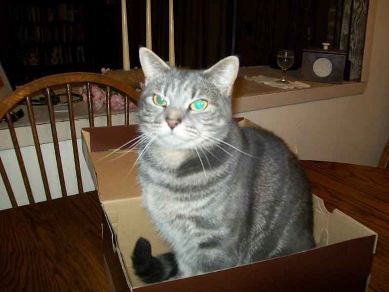 Marcie in shoebox